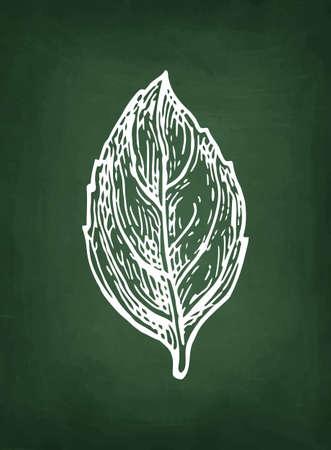 Chalk sketch of basil on blackboard background. Hand drawn vector illustration. Retro style. Illusztráció