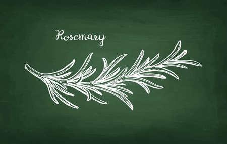 チョークを黒板にローズマリーの枝のスケッチ