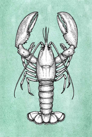 Lobster ink sketch on old paper, Hand drawn illustration in Retro style. Illustration