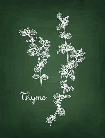 Chalk sketch of thyme on blackboard background. Hand drawn vector illustration. Retro style.