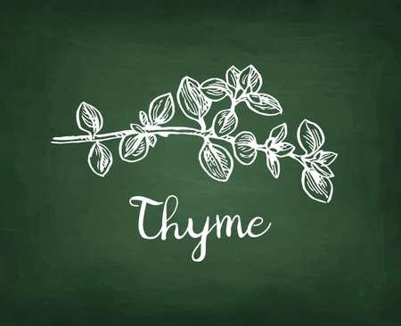 Krijtschets van tijm op schoolbord achtergrond. Hand getekende vectorillustratie. Retro stijl.