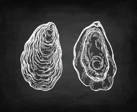 Oysters chalk sketch.