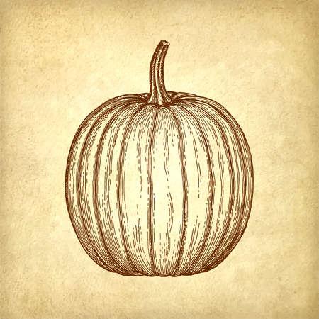 Inktschets van pompoen. Stock Illustratie