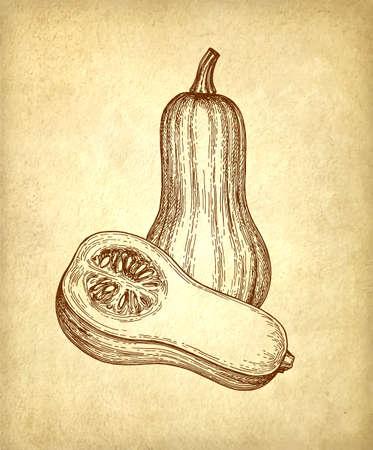 Ink sketch of butternut squash.