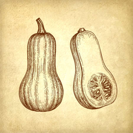 Ink sketch of butternut squash