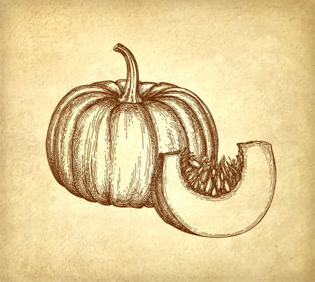 Ink sketch of pumpkin on old paper, Hand drawn illustration in Retro style.