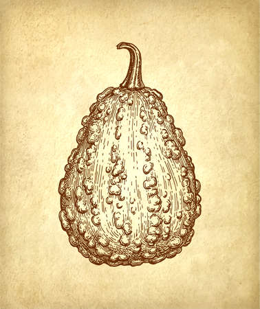 Ink sketch of gourd  on old paper, Hand drawn illustration in Retro style.