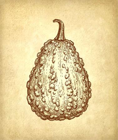 Inktschets van kalebas op oud papier, Hand getekende illustratie in retro stijl.