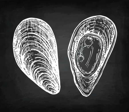 Chalk sketch of mussels
