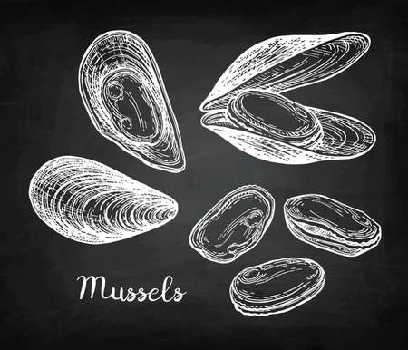 Chalk sketch of mussels 版權商用圖片 - 88026050