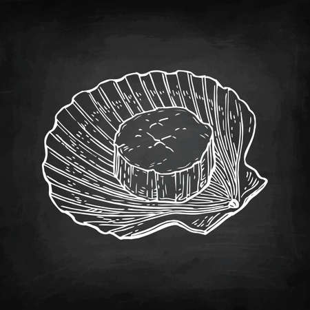 Chalk sketch of scallop Ilustrace