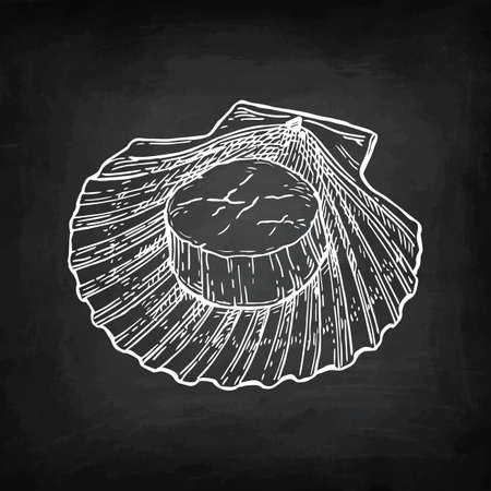 Chalk sketch of scallop Stok Fotoğraf - 88026059