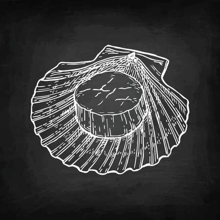 Croquis de craie de pétoncles Banque d'images - 88026059