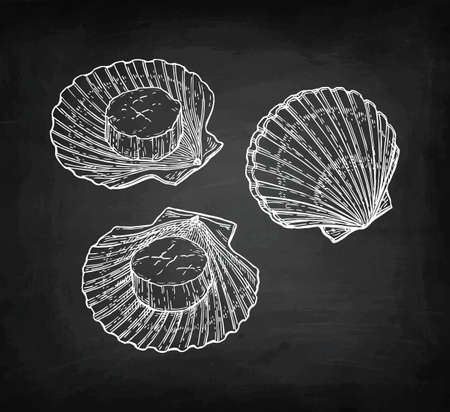 Chalk sketch of scallops Ilustrace