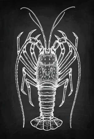 Chalk sketch of spiny lobster