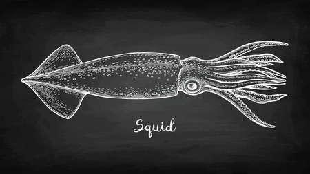Dibujo de tiza de calamar Foto de archivo - 88026068