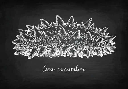 Chalk sketch of sea cucumber Banco de Imagens - 88026066
