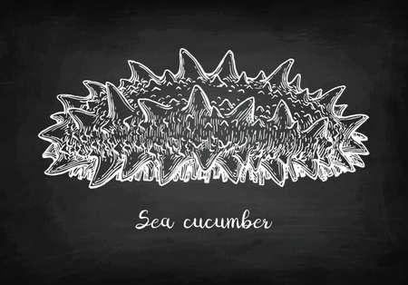 Chalk sketch of sea cucumber Illustration