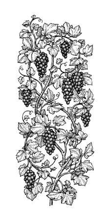 Hand getekende vectorillustratie van druiven. Stock Illustratie