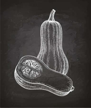 バター スカッシュのチョーク スケッチ  イラスト・ベクター素材