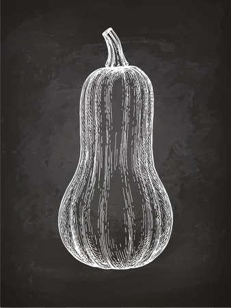 Butternut 스쿼시의 분필 스케치