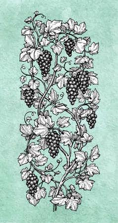垂直ブドウの描き下ろしイラストを手します。  イラスト・ベクター素材