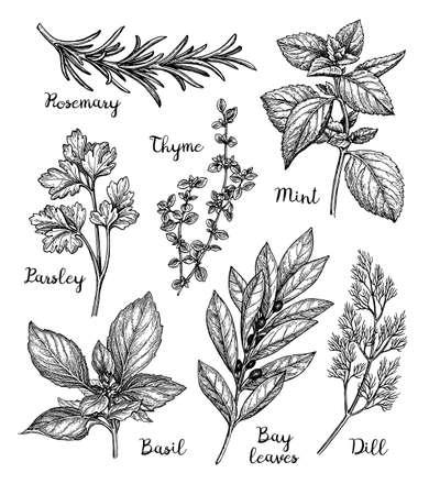 Herbs set Stok Fotoğraf - 88652204