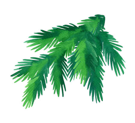 Watercolor fir tree branch Stock Photo