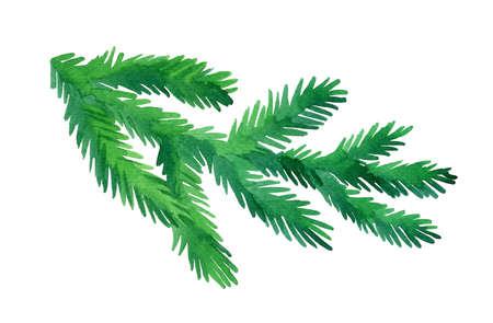 水彩のモミの木の枝