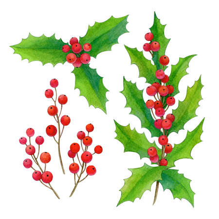Watercolor illustration of holly Stock Photo