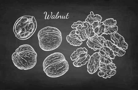 Chalk sketch of walnuts. 版權商用圖片 - 89123677