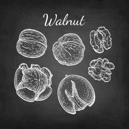 Walnuts set. Chalk sketch of nuts on blackboard background. Hand drawn vector illustration. Retro style.