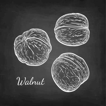 Three walnuts chalk sketch on blackboard background. Hand drawn vector illustration. Retro style. Иллюстрация