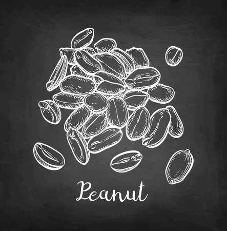 一握りのピーナッツ チョーク黒板背景にスケッチ。手には、ベクター グラフィックが描画されます。レトロなスタイル。