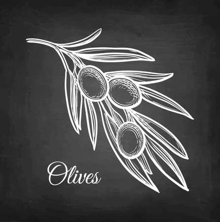 Chalk sketch of olive branch. Illustration