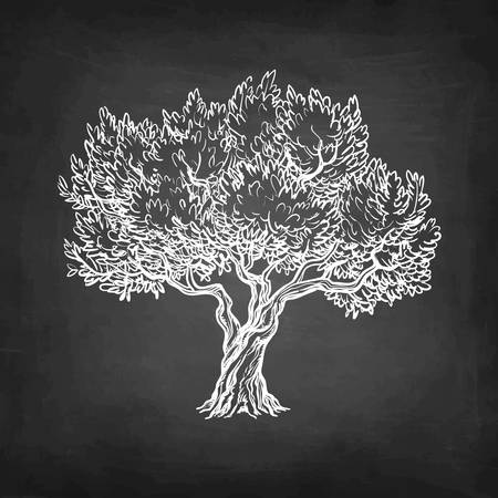 Chalk sketch of olive tree. Illustration