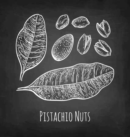 Chalk sketch of pistachio nuts