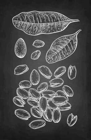 Chalk sketch of pistachio nuts