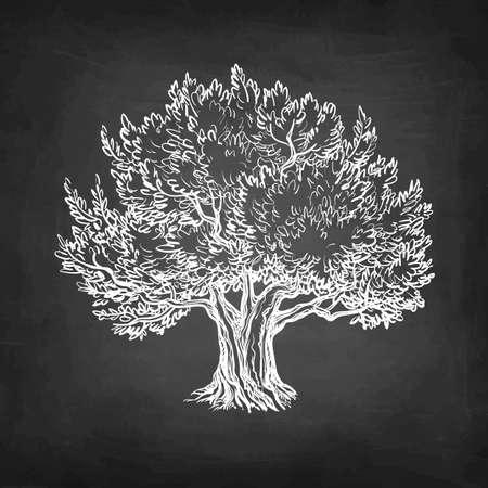 Chalk sketch of olive tree. Illustration