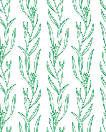Seamless pattern with tarragon.