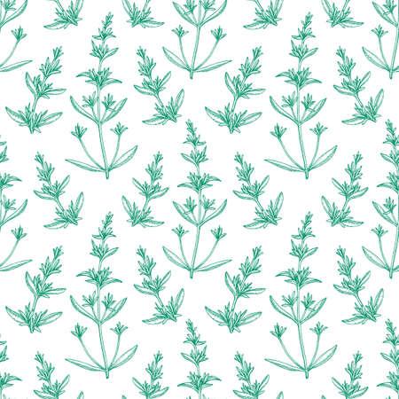 Seamless pattern with savory. Reklamní fotografie - 90020607