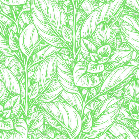 Seamless pattern with oregano.