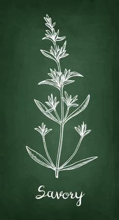 Savory chalk sketch. Illusztráció