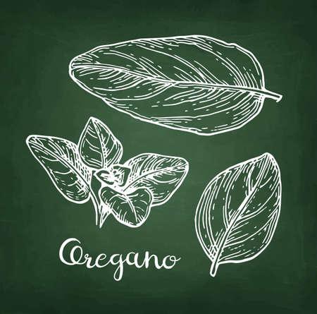Oregano chalk sketch.