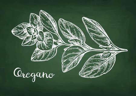 오레가노 분필 스케치.