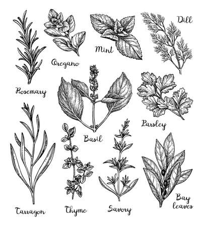 Set of different herbs icon. Çizim