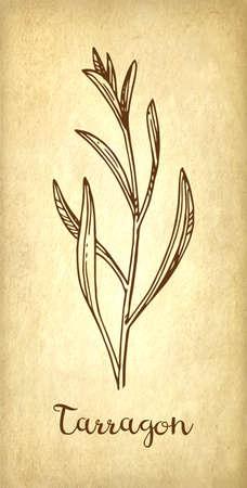 Croquis d & # 39 ; encre estragon sur fond de papier vintage. illustration vectorielle dessinés à la main . style rétro Banque d'images - 91314383