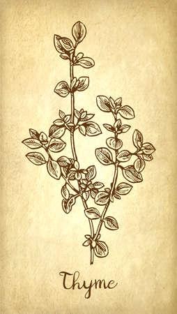 Thyme icon.