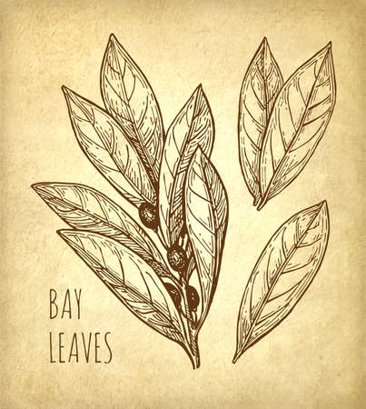 Bay leaves icon.