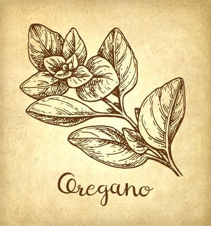 오레가노 아이콘.